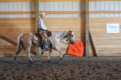Pixie - palomino quarter horse mare for sale