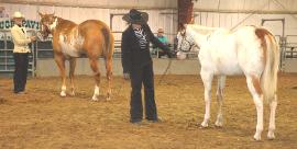 Winners of Produce of Dam and Get of Sire, Canadian Pinto Nationals, August 2009
